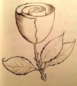 Rose easy beginner drawing
