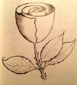 Rose easy beginner drawing