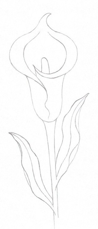 How to draw a lily - Step fourteen