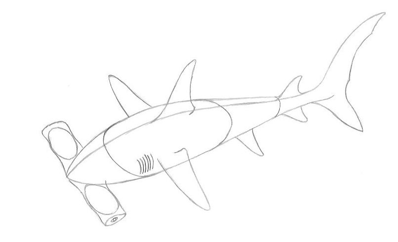 How to Draw a Hammerhead Shark - Step Four